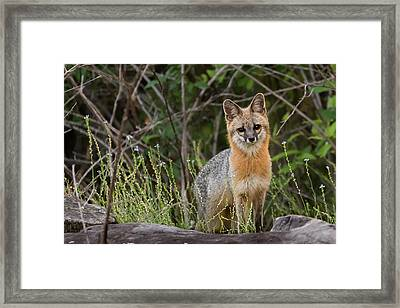 I'm Back Framed Print