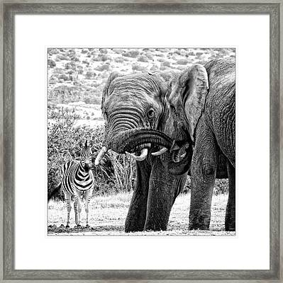I'm Bored Framed Print