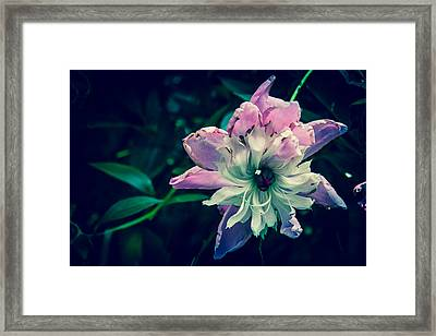 I'm Dying Over Here  Framed Print by Off The Beaten Path Photography - Andrew Alexander