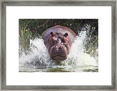 I'm Going To Get You !! Framed Print by Wayne Pearson