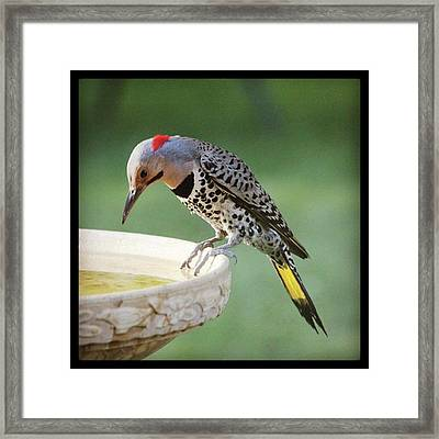 I See My Reflection Framed Print