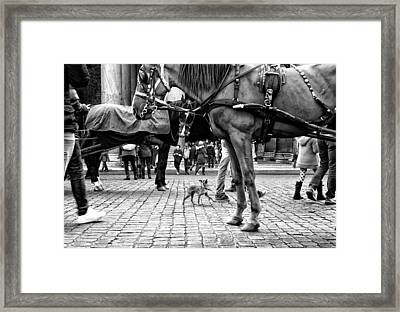 I'm Here! Framed Print by Lorenzo Grifantini