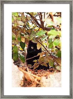 I'm Hiding Framed Print by Bob and Nancy Kendrick