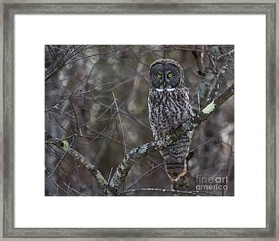 I'm Hungry- Great Gray Owl Framed Print by Lloyd Alexander