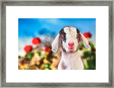 I'm In The Rose Garden Framed Print