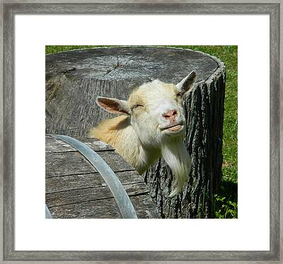 I'm Lucy - I Like You Framed Print