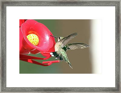 I'm Out Of Here Framed Print