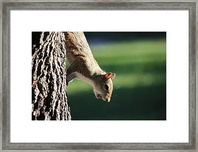 I'm Outta Here Framed Print by Mandy Shupp