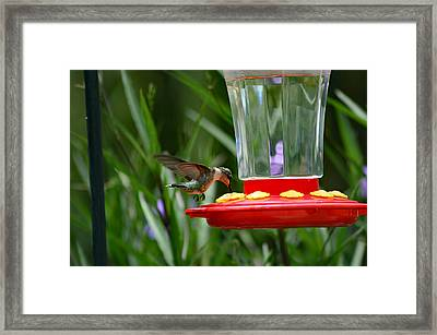 I'm Really Thirsty 2 Framed Print