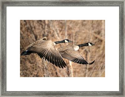 I'm Right Behind Ya Framed Print by Donna Kennedy