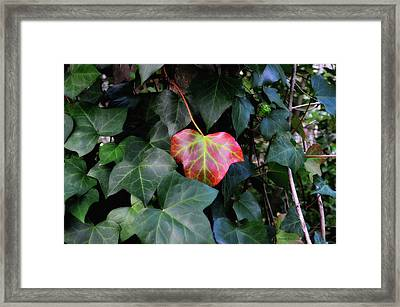 I'm So Embarrased Framed Print by Donna Blackhall
