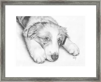 I'm Sorry - Australian Shepherd Puppy Framed Print by Heather Page
