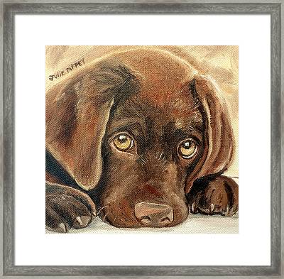 I'm Sorry - Chocolate Lab Puppy Framed Print