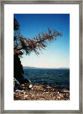 Framed Print featuring the photograph I'm Still Here   by John Scates