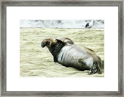 Framed Print featuring the photograph Im Too Sexy by Anthony Jones