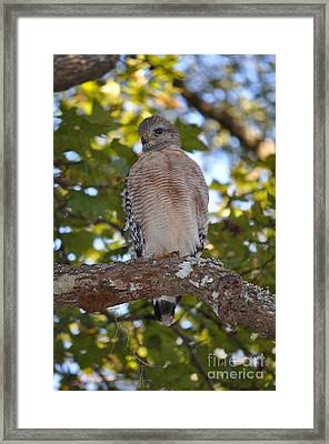 I'm Watching You - 2 Framed Print