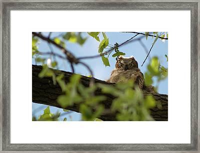 I'm Watching You Framed Print by Matt Steffen