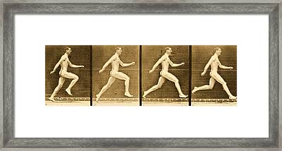 Image Sequence From Animal Locomotion Series Framed Print by Eadweard Muybridge