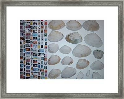 Images And Shells Framed Print by Biagio Civale