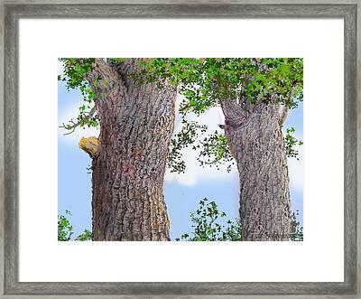 Imaginary Trees Framed Print by Jim Hubbard