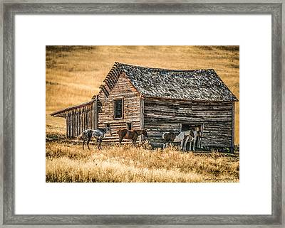 #2204 - Harrison Montana Framed Print