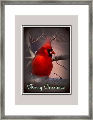 Img_3158-005 - Northern Cardinal Christmas Card Framed Print