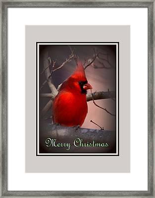 Img_3158-005 - Northern Cardinal Christmas Card Framed Print