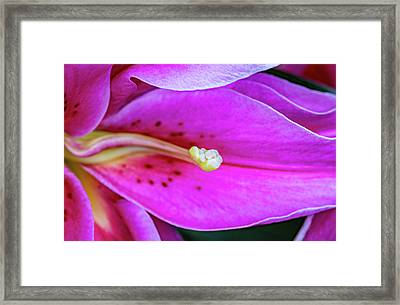 Immerse Yourself 3 Framed Print by Steve Harrington