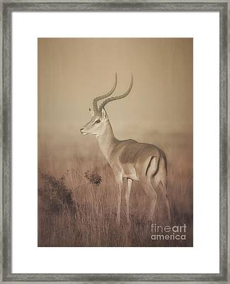 Framed Print featuring the photograph Impala At Dawn by Chris Scroggins