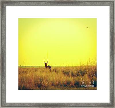 Impala Sunset Vintage Print Framed Print by Tim Hester