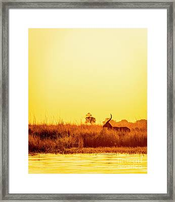 Impala Vintage Sunset Silhouette Framed Print by Tim Hester