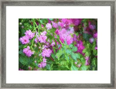 Impasto Roses Framed Print