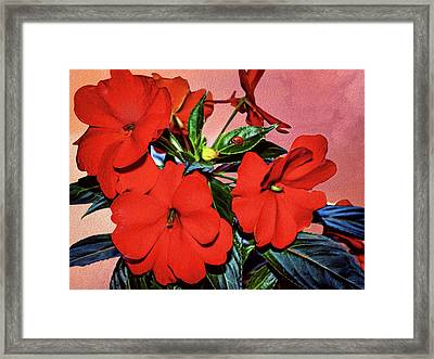Impatience With Ladybug Framed Print