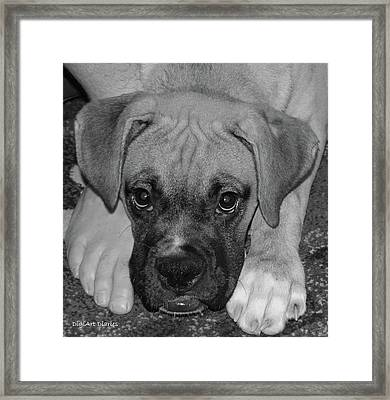 Impawsible Framed Print by DigiArt Diaries by Vicky B Fuller