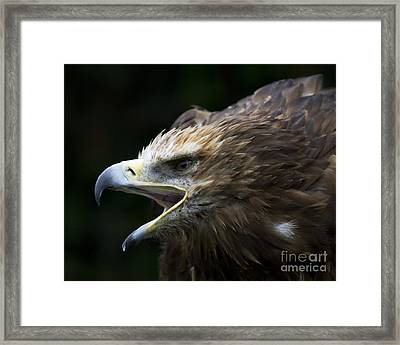 Imperial Eagle 1 Framed Print by Heiko Koehrer-Wagner