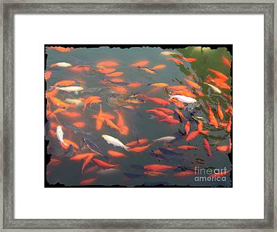 Imperial Koi Pond Framed Print by Carol Groenen