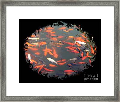Imperial Koi Pond With Black Swirling Frame Framed Print by Carol Groenen