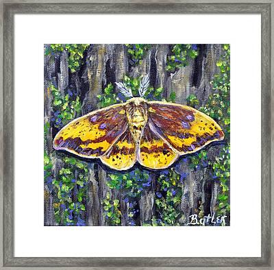 Imperial Moth Framed Print by Gail Butler