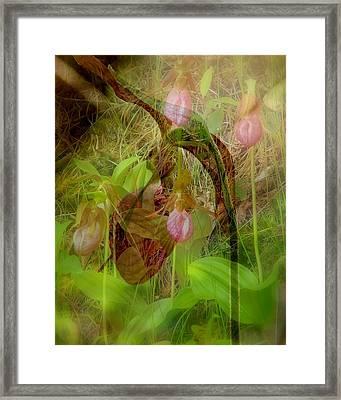 Imperiled Framed Print by Priscilla Richardson
