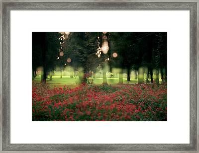 Framed Print featuring the photograph Impression At The Yarkon Park by Dubi Roman