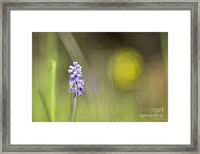 Impression Framed Print by Jivko Nakev