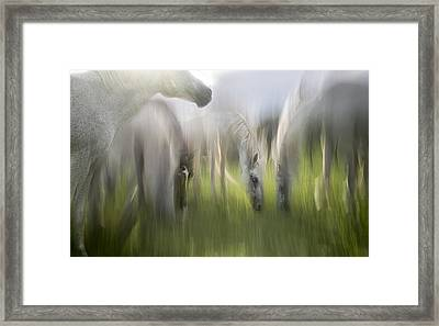 Impression Framed Print by Milan Malovrh