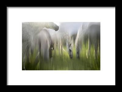 Blurry Framed Prints