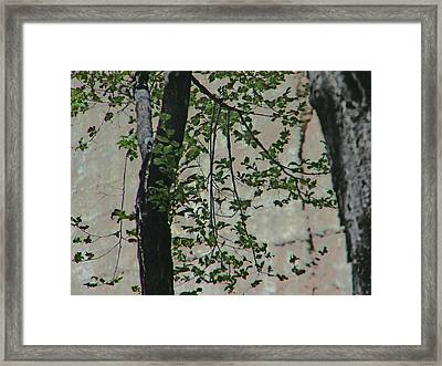 Impression Of Wall And Trees Framed Print