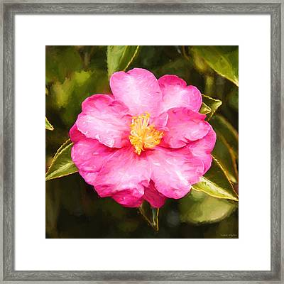 Impressionist Floral Pink Camelia Framed Print by Michelle Wrighton