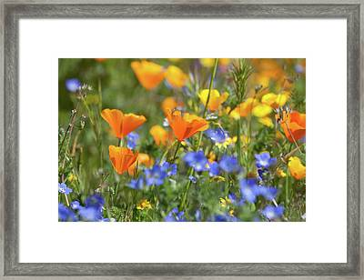 Framed Print featuring the photograph Impressionist Wildflowers by Cliff Wassmann