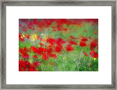 Impressionistic Blossom Near Shderot Framed Print