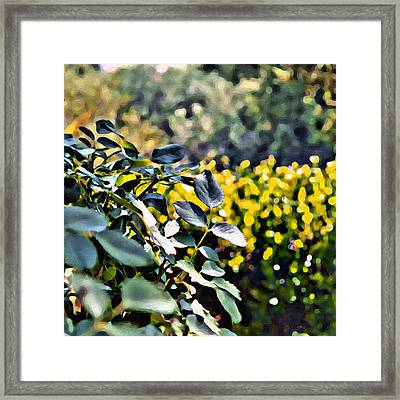 Impressions From A Park - Two Framed Print
