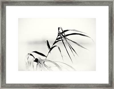 Impressions Monochromatic Framed Print by Tomasz Dziubinski
