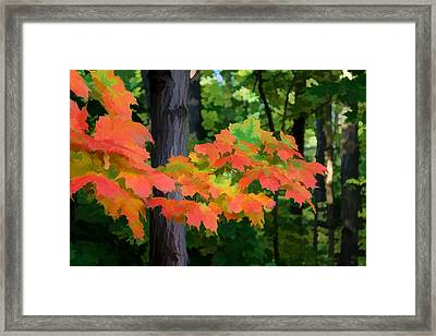 Impressions Of Forests - The First Red Maple Leaves Framed Print